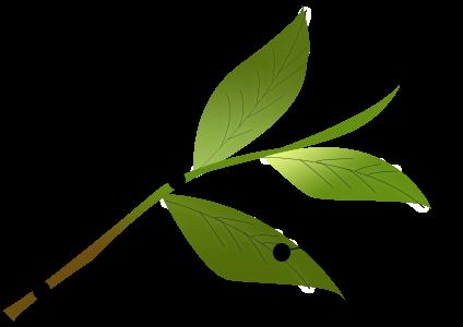 茎茶の使用部位説明