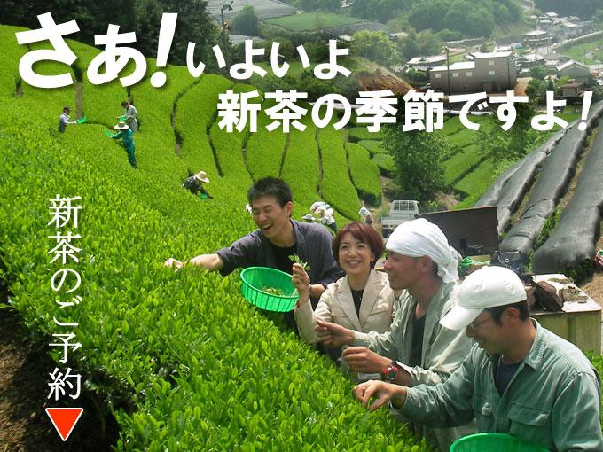 新茶の予約・販売