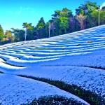 tea-field-in-snow