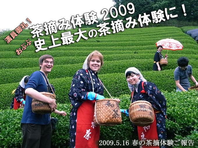【報告】史上最大!春の茶摘み体験2009