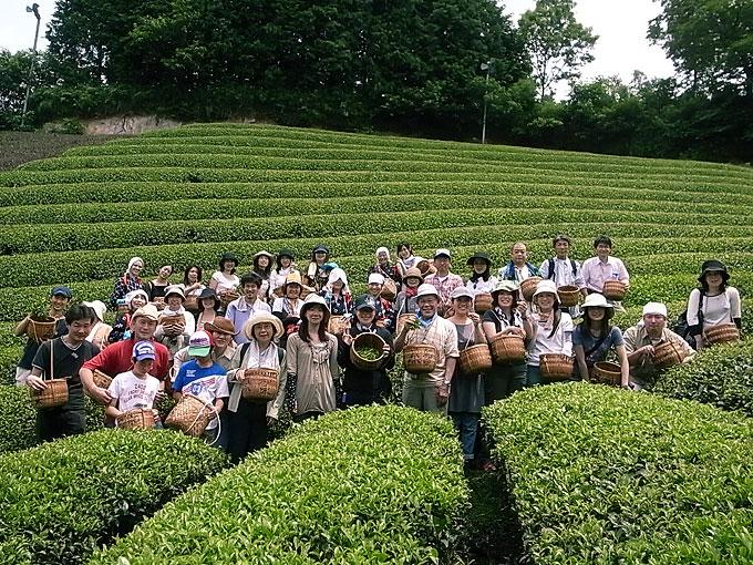 【ご感想】夏の茶摘体験の参加者さまより