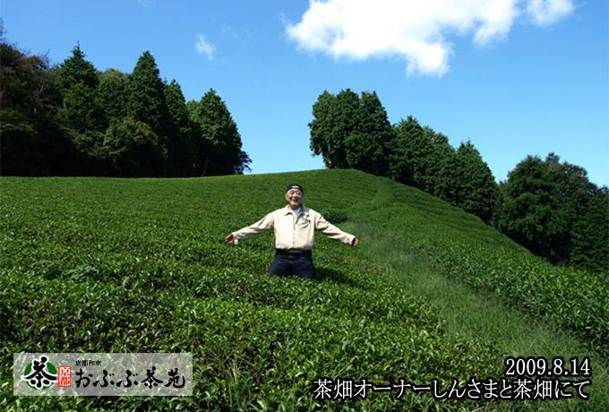 しんさまは茶畑オーナーです