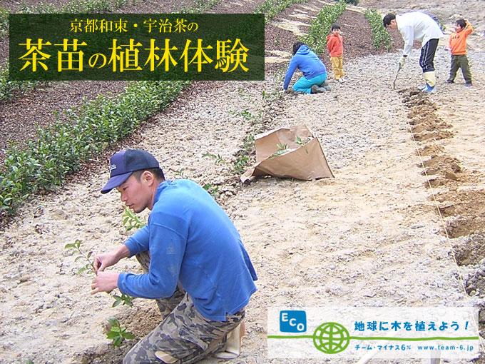 【ご案内】茶苗の植林体験