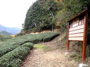 【プレスリリース】5/8 母の日には、「京都の茶畑一坪」を贈ろう