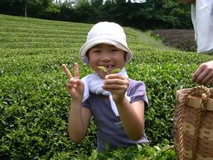 【プレスリリース】200人で目指せ、日本一のお茶!