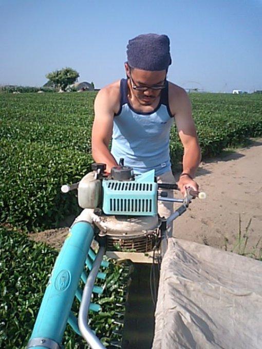 夏の新茶シーズンの到来!