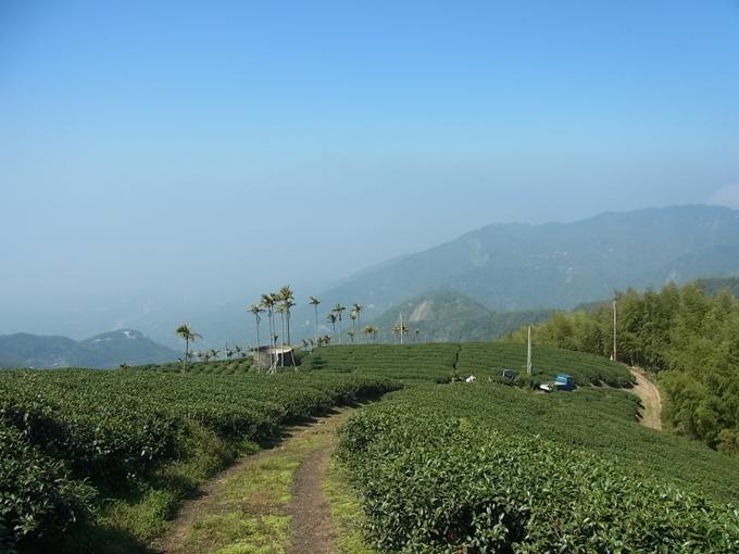 台湾・阿里山(アリサン)の茶畑