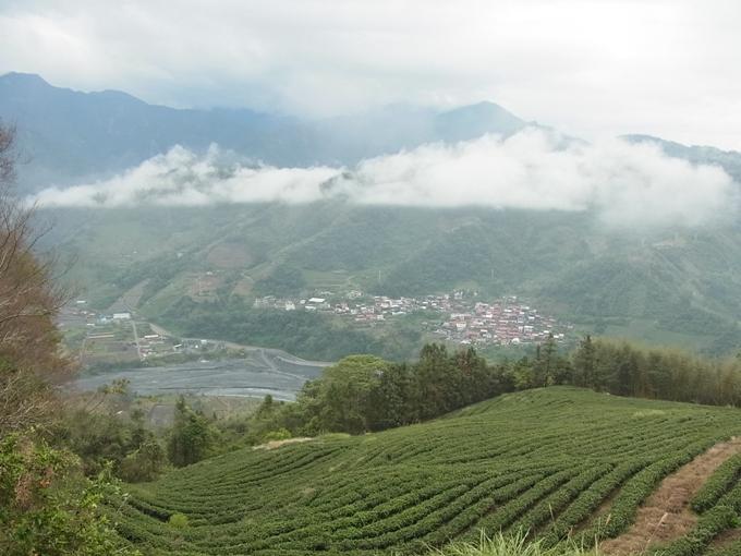 台湾・埔里(プーリー)の茶畑