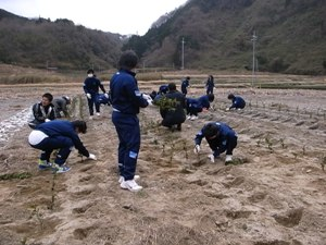 【地域】中学生の茶苗の植林体験2011