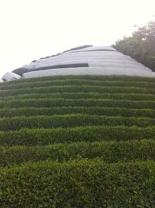 【7月1~2週の農作業】2番茶収穫~