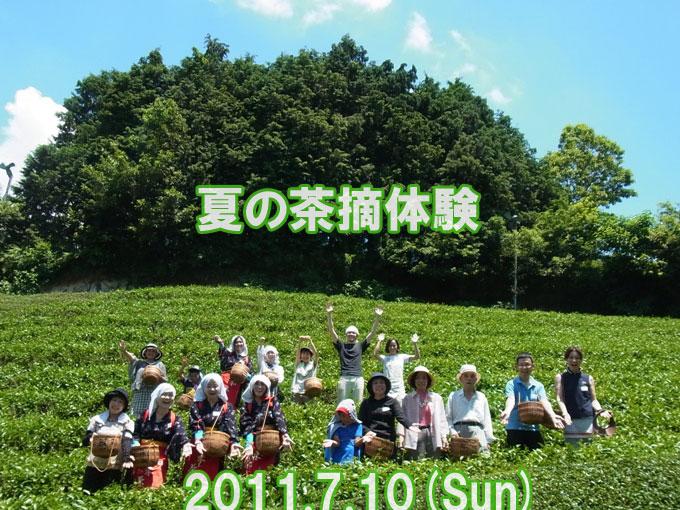 【ご報告】夏の茶摘体験