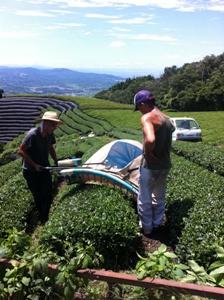 【7月3~4週の農作業】2番茶の収穫、ピークシーズンの閉幕。
