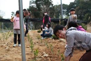 【イベント報告】植林体験2013