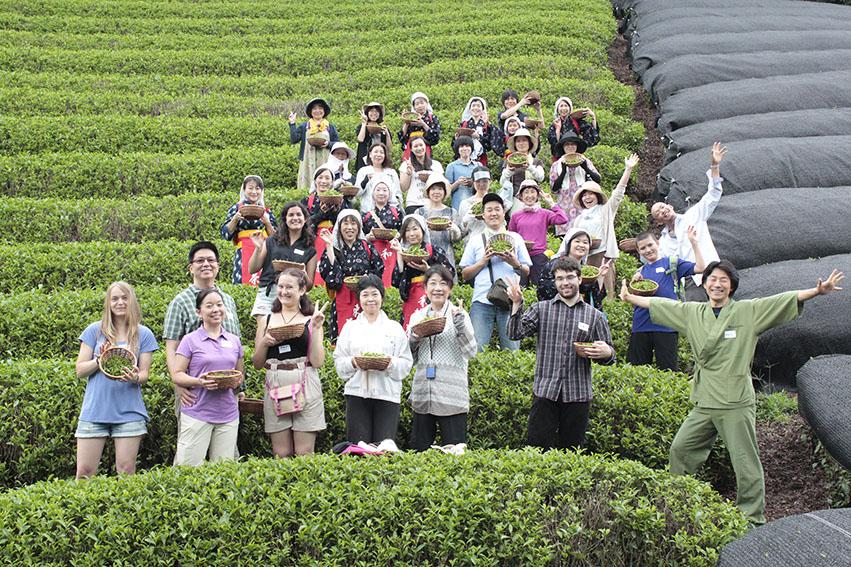 【イベント報告】夏の茶摘体験2014