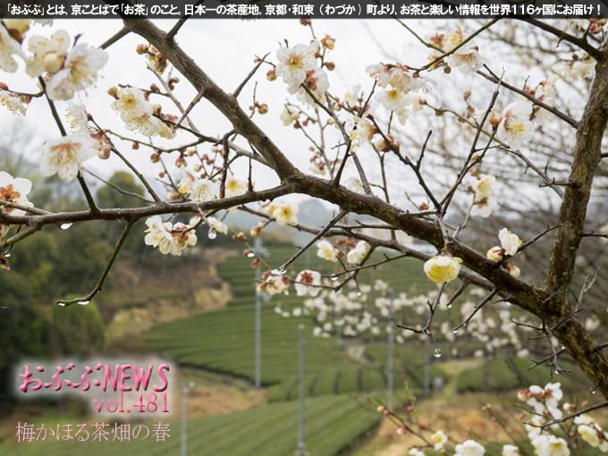 【おぶぶNEWS】 梅が咲いたのでお買い得商品追加しました!!
