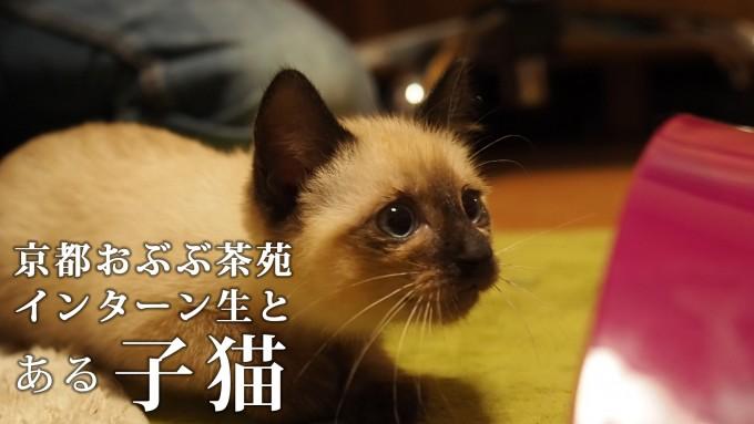 おぶぶのインターン生と子猫