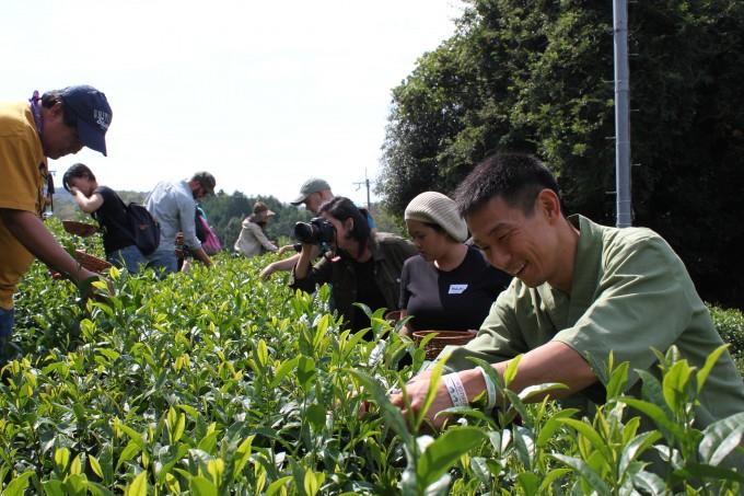 【インターン生日記№7】 秋の茶摘み体験
