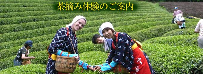 京都おぶぶ茶苑のイベント