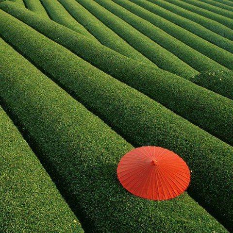 デンマーク・コペンハーゲンのお茶屋さんが素敵な写真を!! Obubuの茶畑オーナーでもあります!!