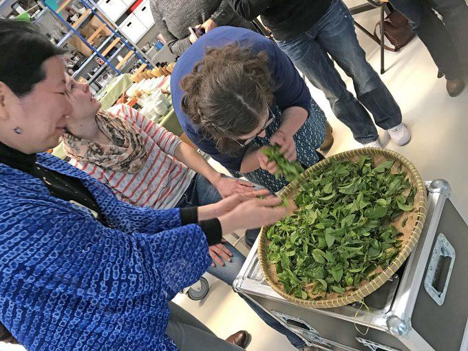 日本茶を世界へ|ハーグ(オランダ)【日本茶普及欧州ツアー2017】