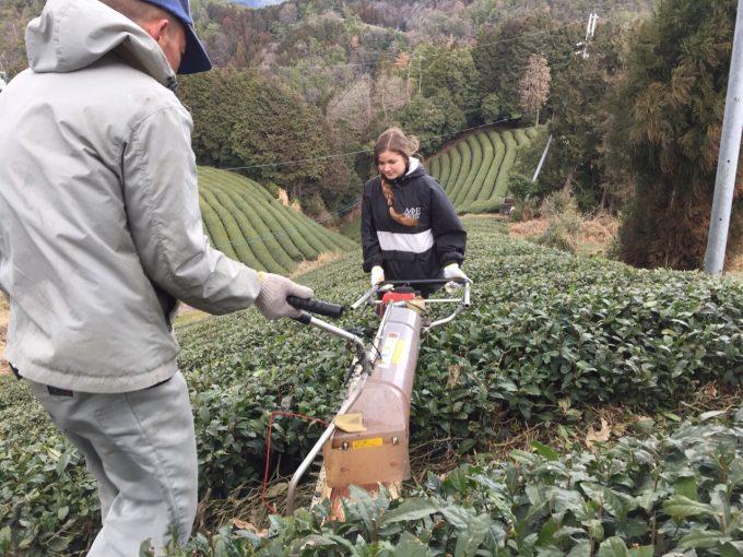 今週の農作業 茶畑 ならし