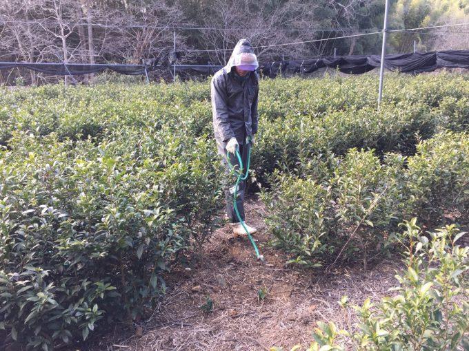 今週の農作業 育成幼木茶畑の補植 【京都 宇治茶 和束町】