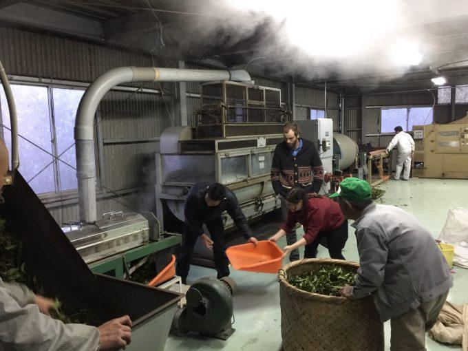 冷凍煎茶工場が動き出しましたっ【京都 宇治茶 和束町】
