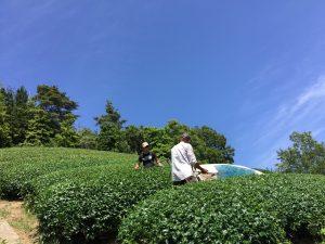 今週の農作業です【京都 宇治茶 和束町】