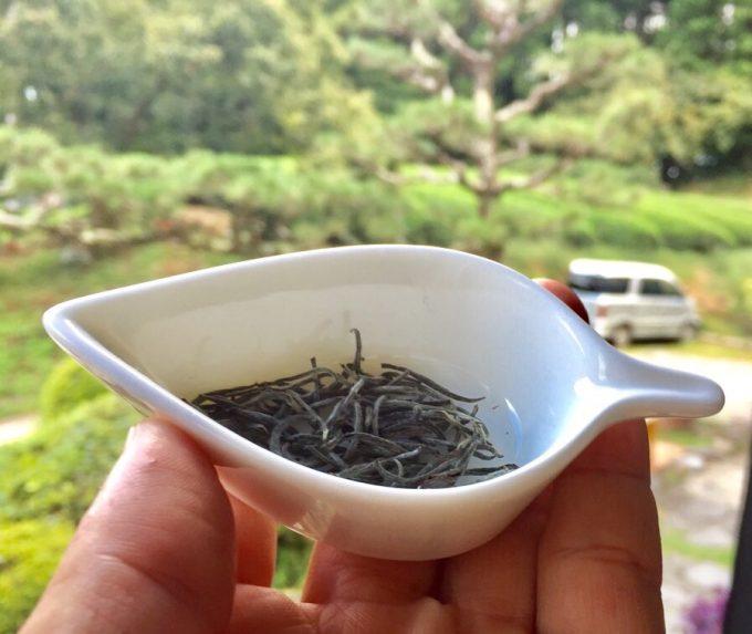 白茶-Whiteteaぽいのつくってみましたっ【宇治茶 京都 和束町】