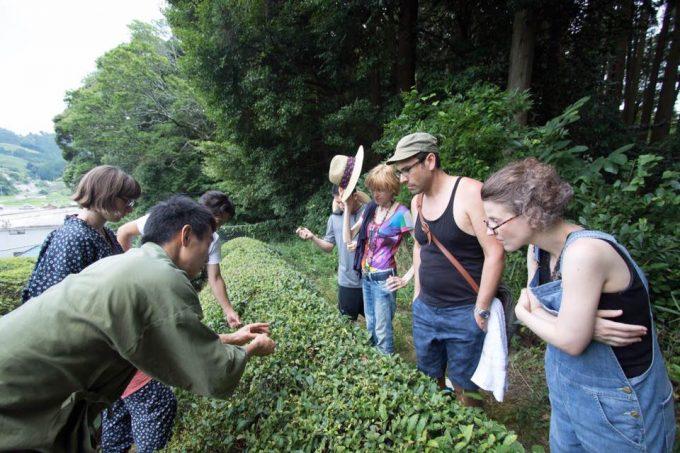 日本茶のマスターコース