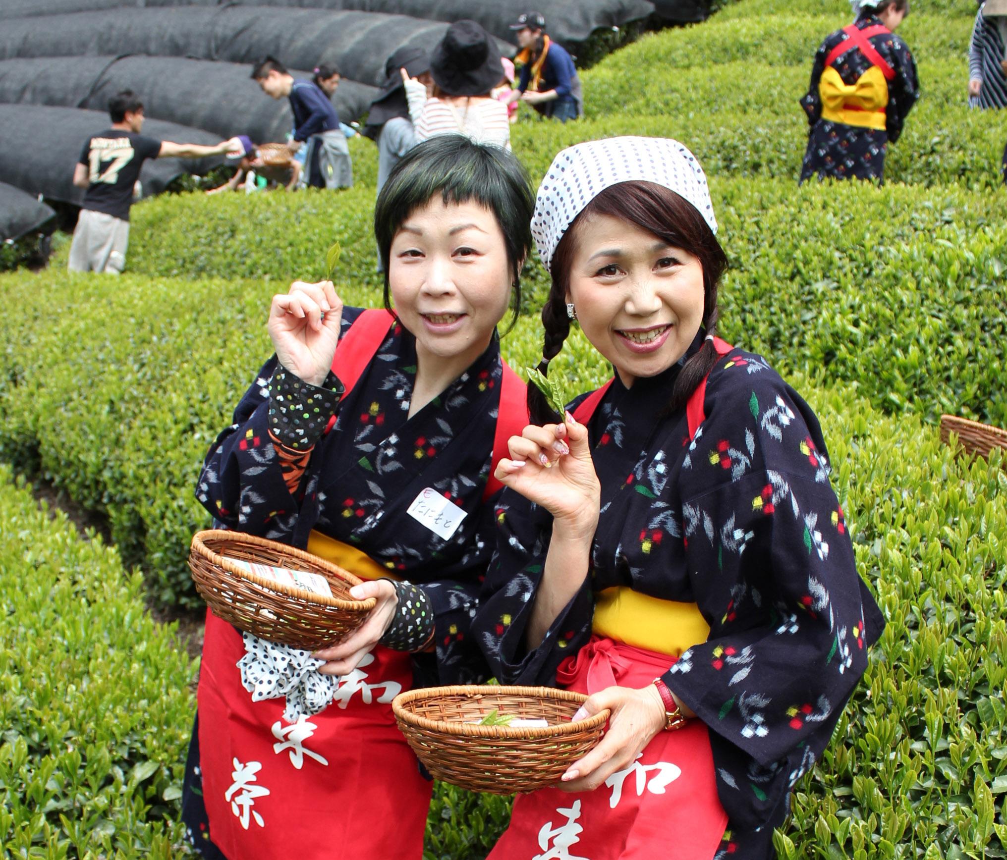 【茶畑オーナー制度】お茶のエキスパート