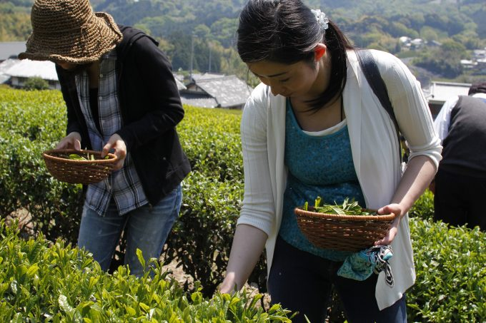 【茶畑オーナー様限定イベント】八十八夜会のご案内