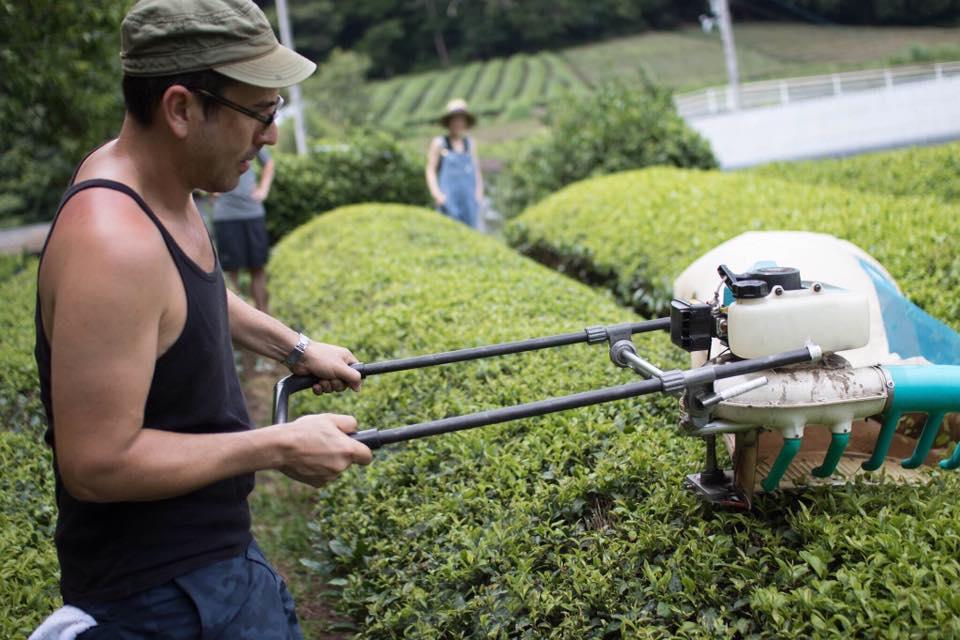 【募集】日本茶インストラクター&日本茶アドバイザー限定 日本茶の生産現場どっぷり体験プログラム