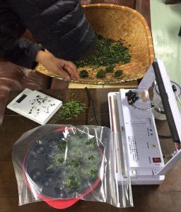製茶工場って、とってもいい匂いがするんですっ!【京都 宇治茶 和束町】