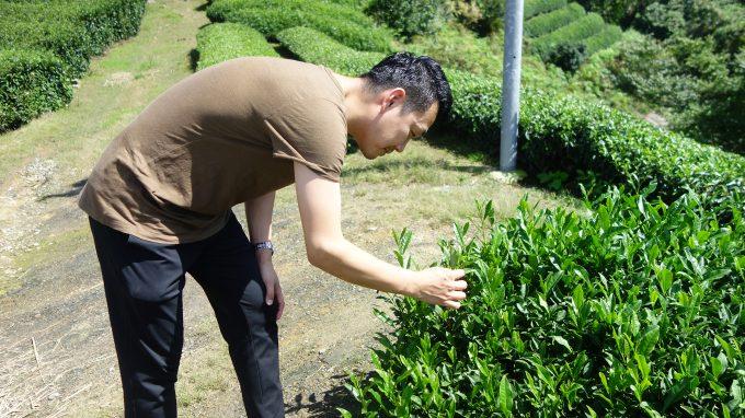 【茶畑オーナー制度】広島から茶畑に~~~