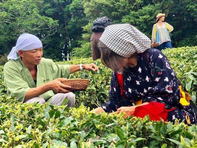 【京都 宇治茶 和束町】2019年夏の茶摘み&手もみ製茶体験の開催ご報告