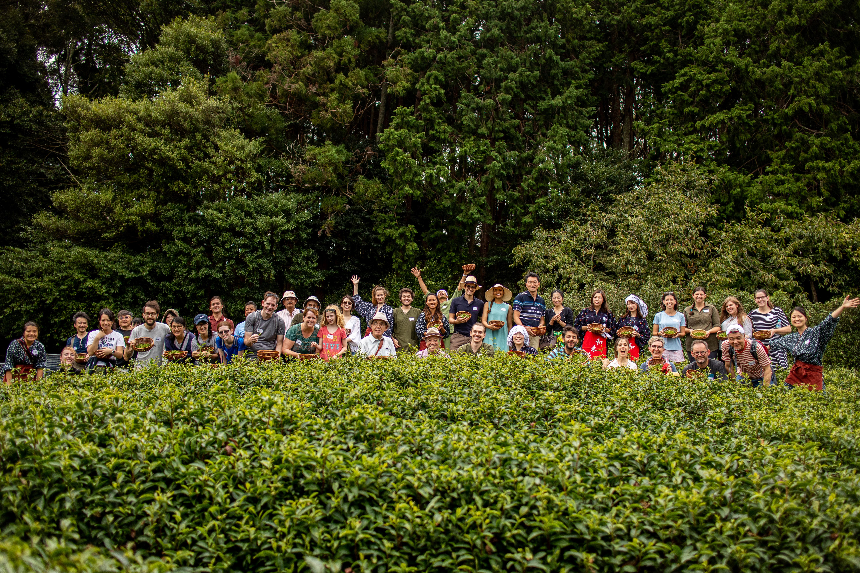 【京都 宇治茶 和束町】秋の茶摘み&手もみ製茶体験2019!開催ご報告