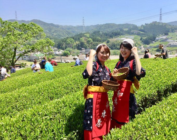 2020年も、春の茶摘み&手揉み製茶体験開催します!【京都 宇治茶 和束町】