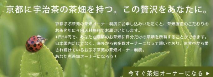 茶畑オーナー制度をちょっぴり改革したいです!【京都 宇治茶 和束町】