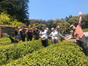 【京都 宇治茶 和束町】2020年夏の茶摘み&手もみ製茶体験の開催ご案内