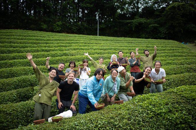 【京都 宇治茶 和束町】夏の茶摘み&手もみ製茶イベント開催ご報告!