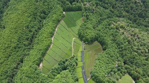 【持続可能な農業】とは? 無農薬無施肥で玉露つくってみます!