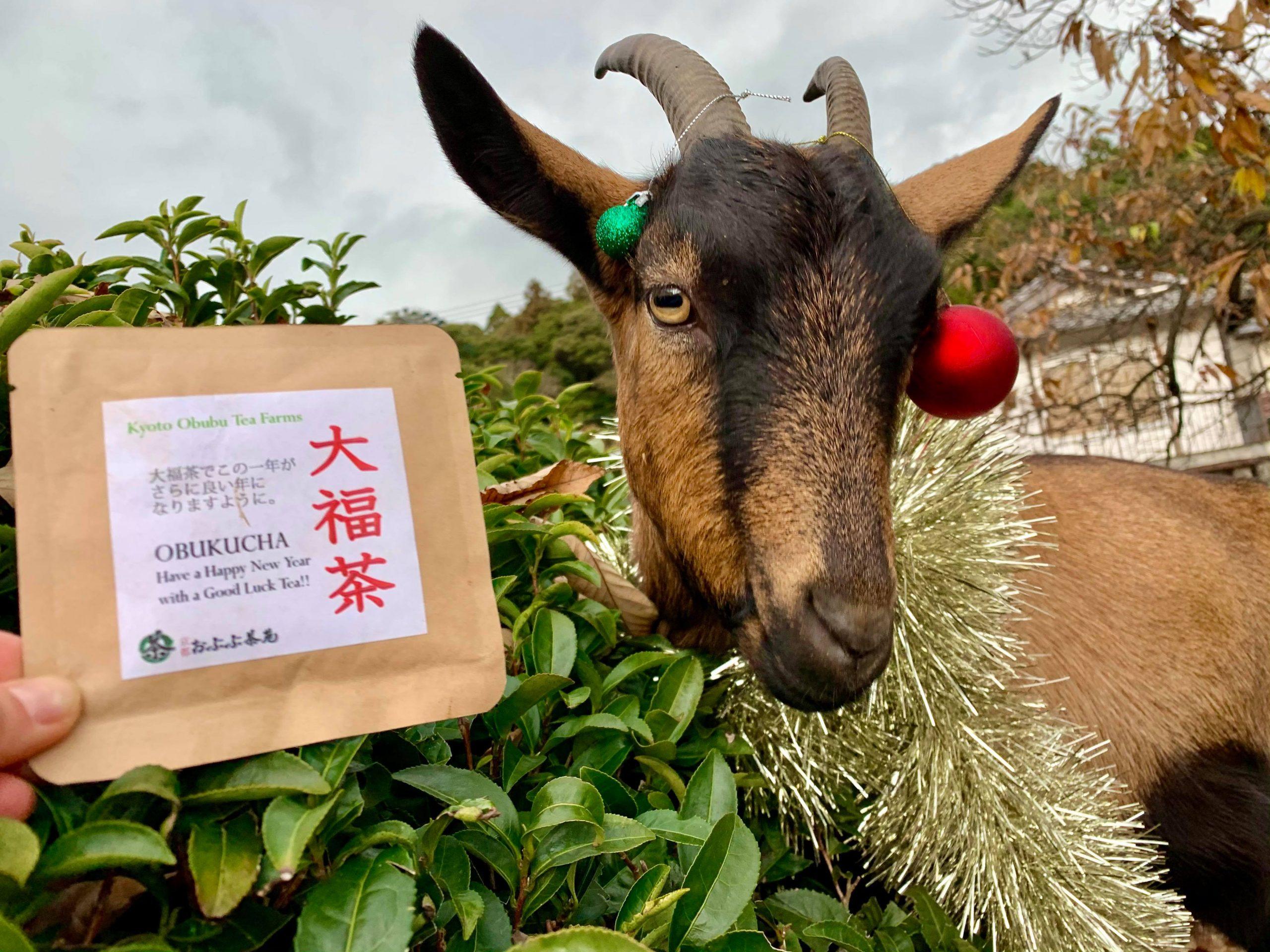 【茶畑オーナー制度】旬のお茶をお届けします!!