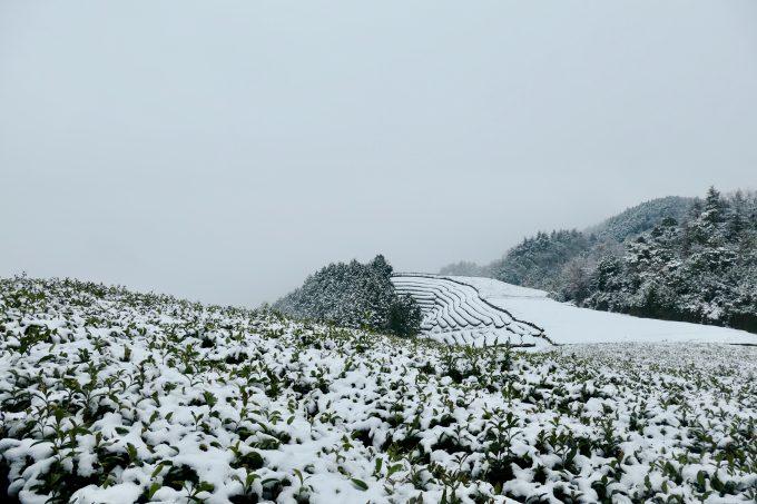 和束で久々に雪がたくさん降りました〜!