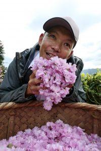 今年も桜の花をたくさん摘みました!