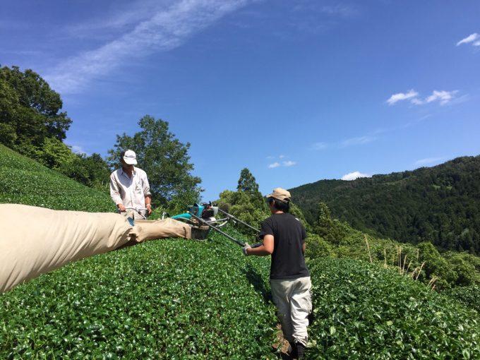 【おぶぶの活動】援農ボランティアしませんか!!