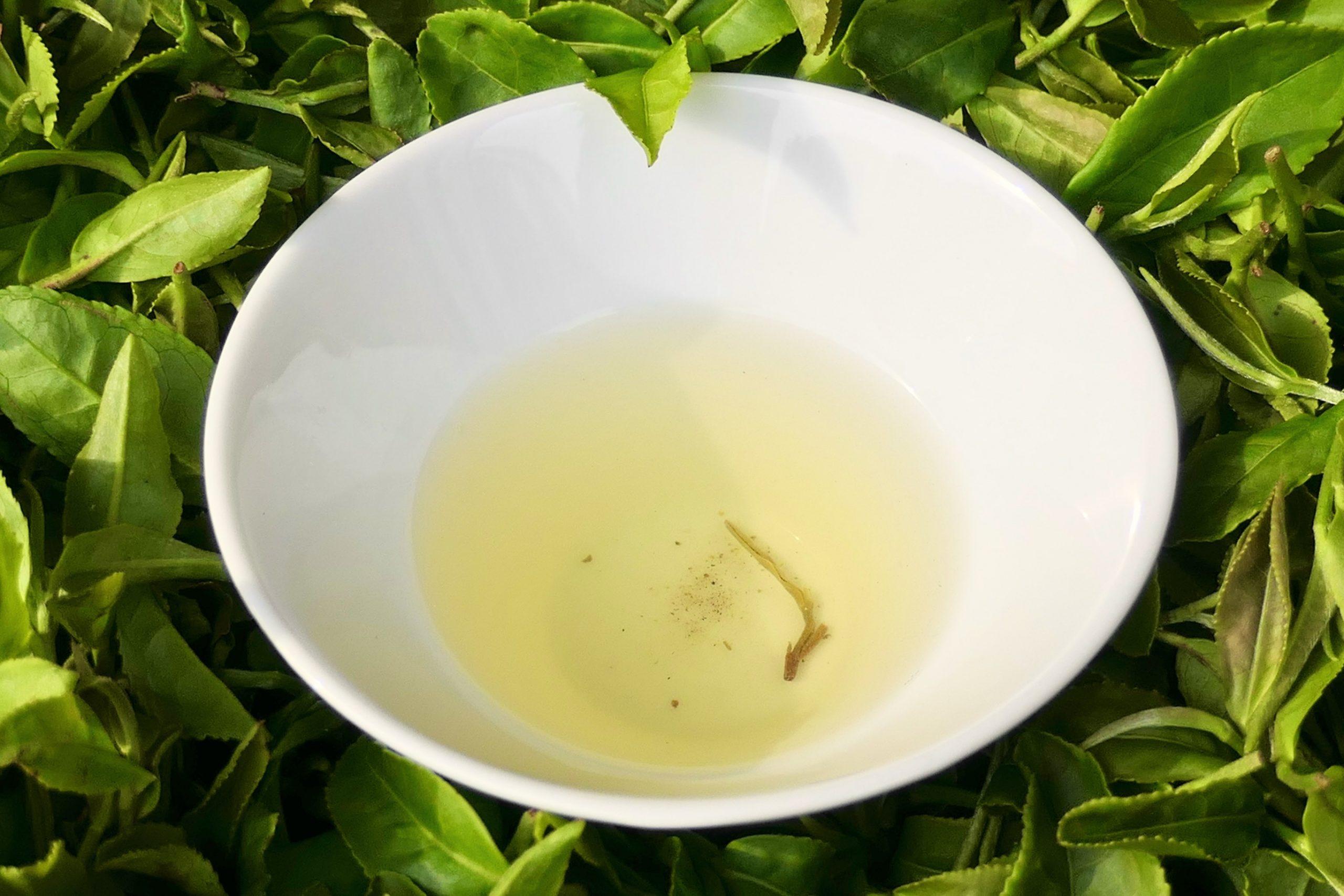 【イベント報告】夏の茶摘体験2021 京都・和束町